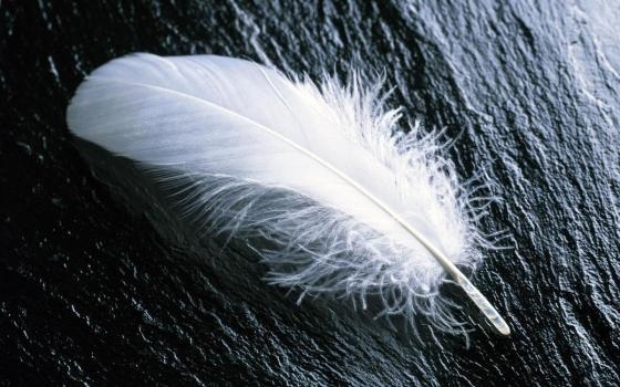 white_feather_widescreen